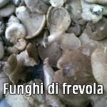 Funge, funghi di frevola