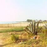 Vegetazione a ridosso della spiaggia